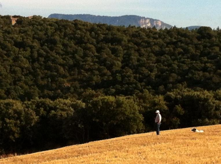 Shepherd and sheep dog near Azqueta