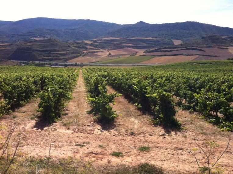 Vineyards near Azqueta