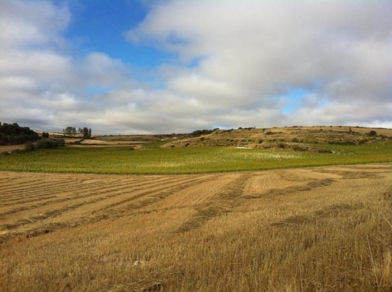 The Meseta near Rabe de las Calzado