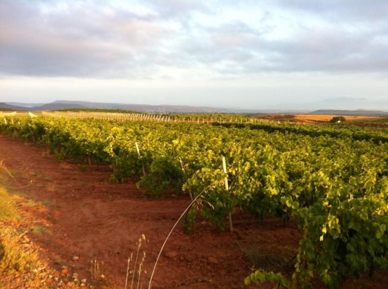 Vineyards near Najera