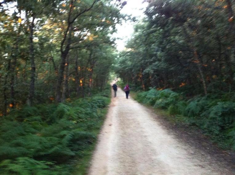 Trail at first light, near Villafranca Montes de Oca