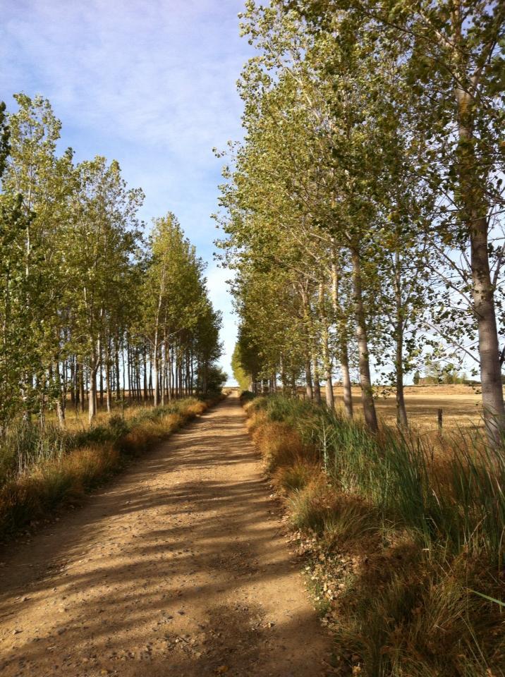 Trail through Terra de Campos