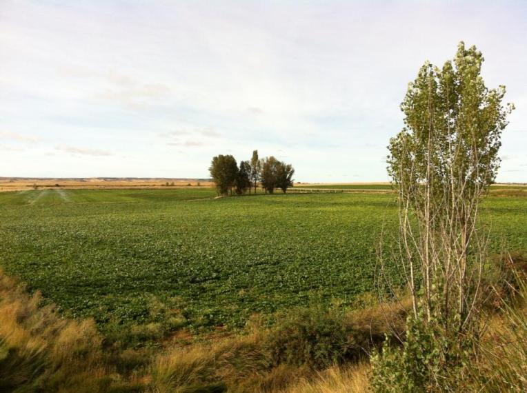 Terra de Campos