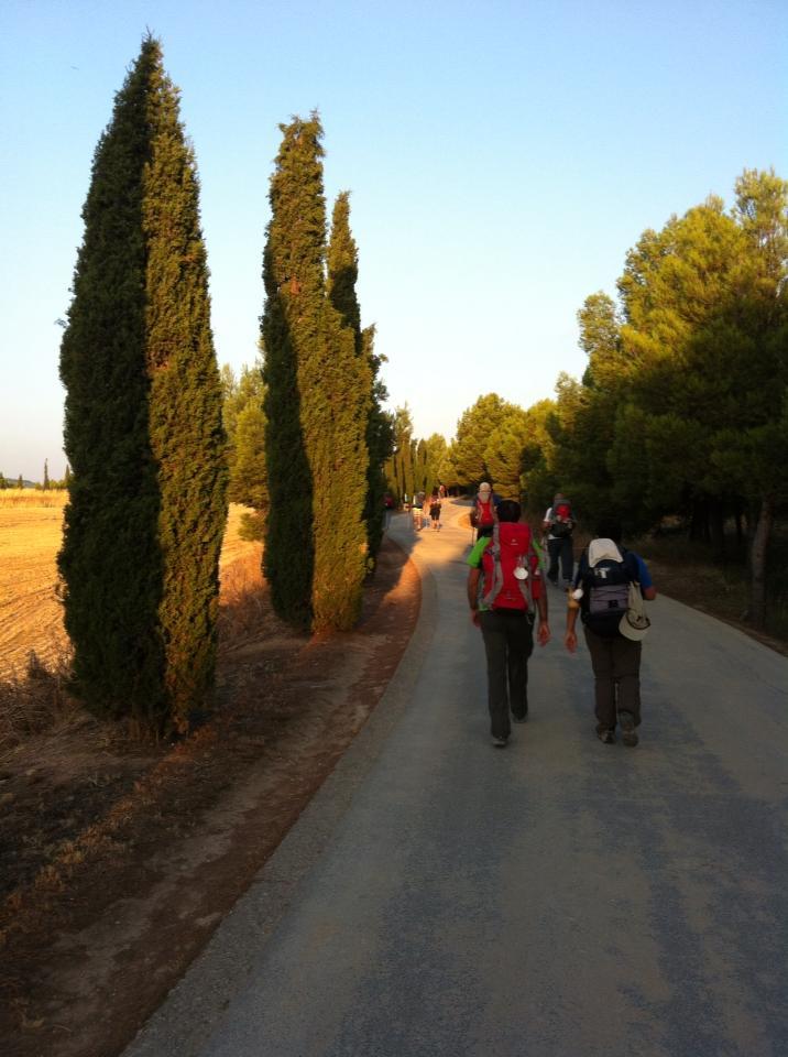 Cypress lined trail near Navarette