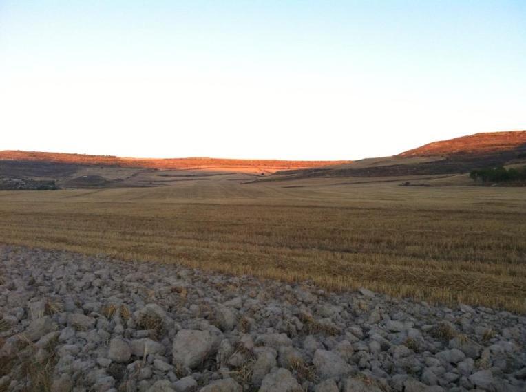 Hayfield near Castrojeriz
