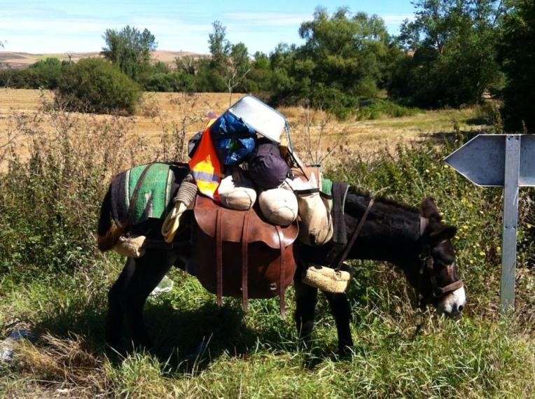 Yet another method of transportation on the Camino de Santiago, burro with gear, Villafranca Montes de Oca