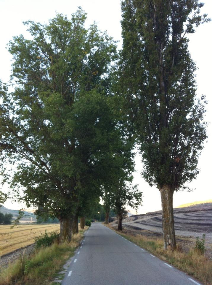Tree-lined route to Castrojeriz