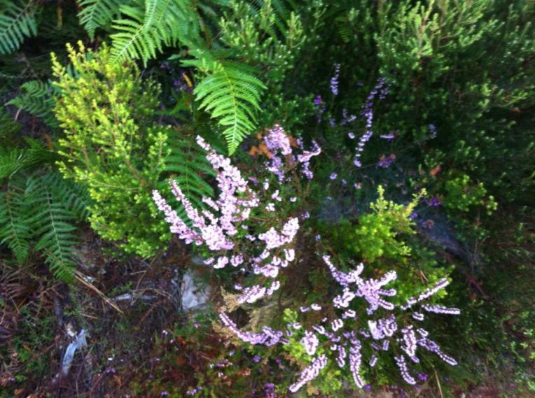 Local flora near Monumento de los Caidos