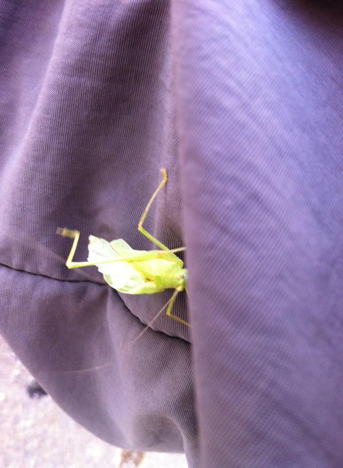 Hitch-hiker on Tracy's pant leg, Fromista
