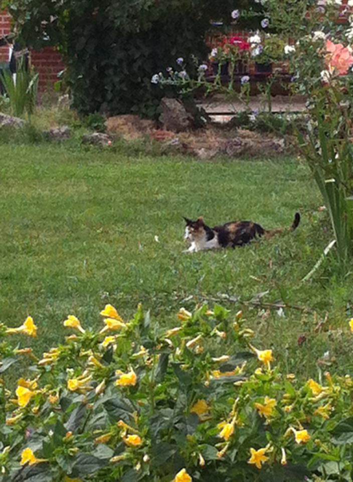 Gatto (cat) playing outside