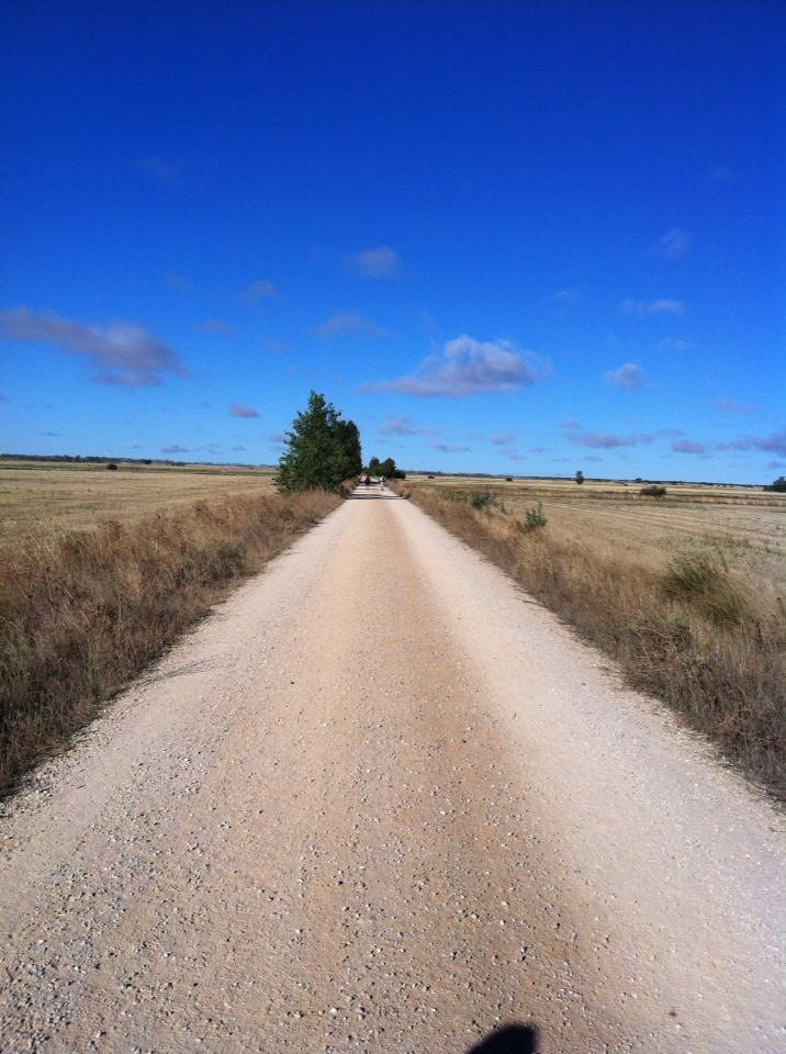 The trail outside of Carrion de los Condes