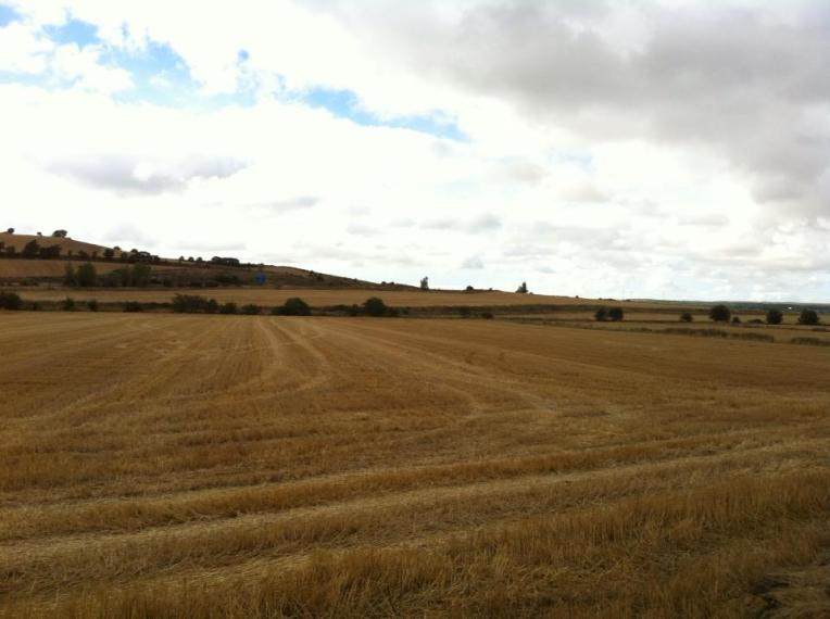 Farmlands near Cardenuela