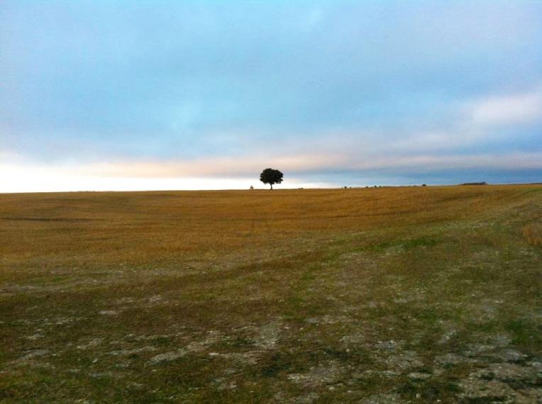 Lone tree on the Meseta near Rabe de las Calzados