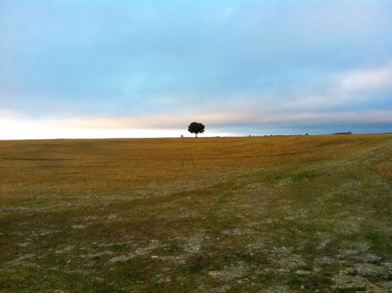 Lone tree on the Meseta near Rabe de las Calzados