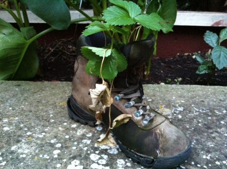 Boot planter, appropriate for the Camino, Logrono