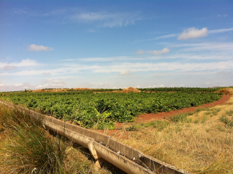 Vineyards and raised aqueduct near Azofra