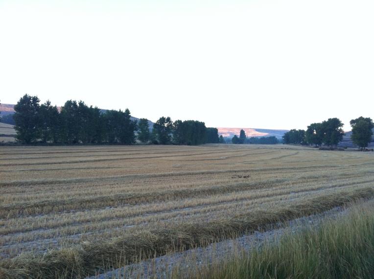 Farmland outside of Hontanas