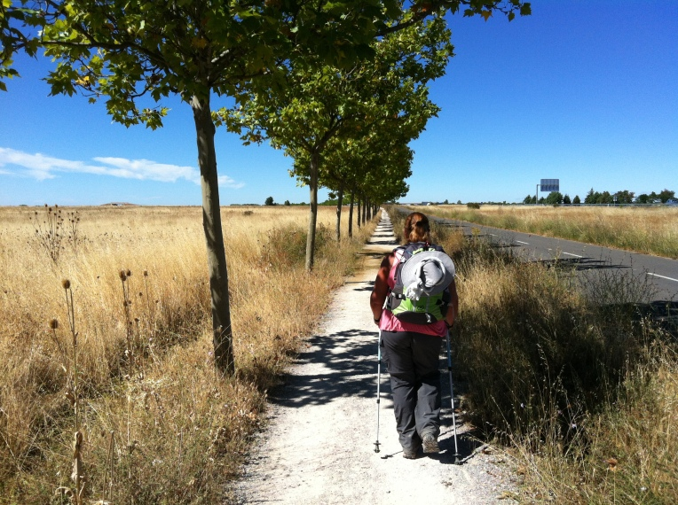 Tree-lined senda to Bercianos del Real Camino