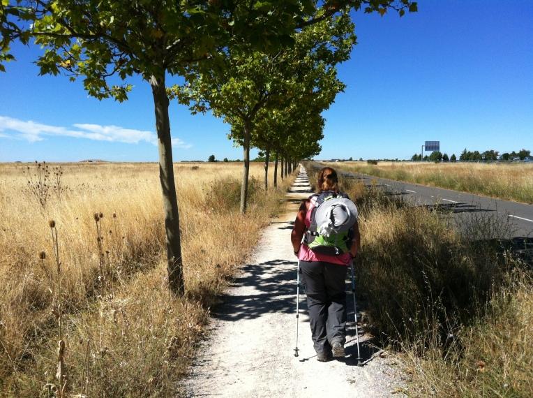 Tree-lined senda to Bercianos del Real Camino