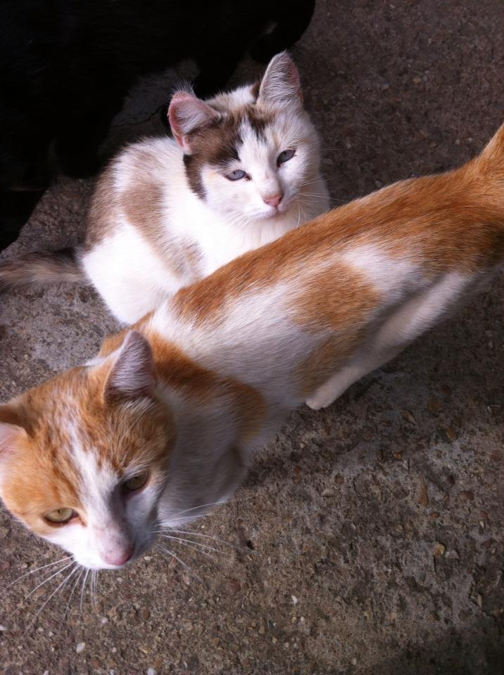 Friendly cats at the cowboy bar in El Ganso