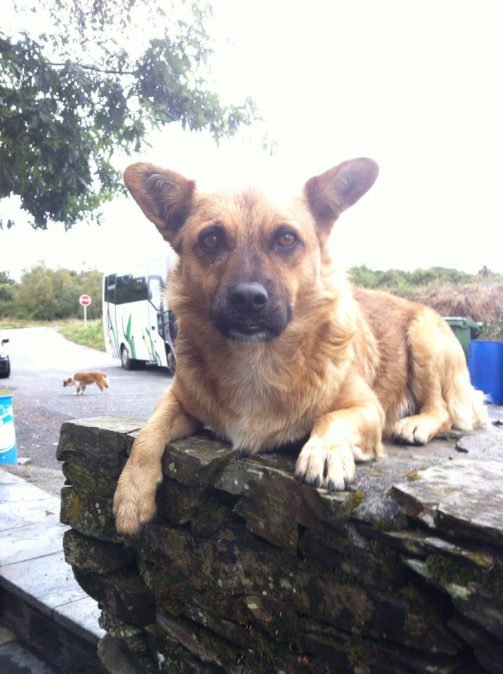Camino perro at café near Furela