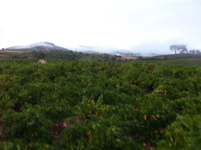 Vineyard near Villafranca del Bierzo