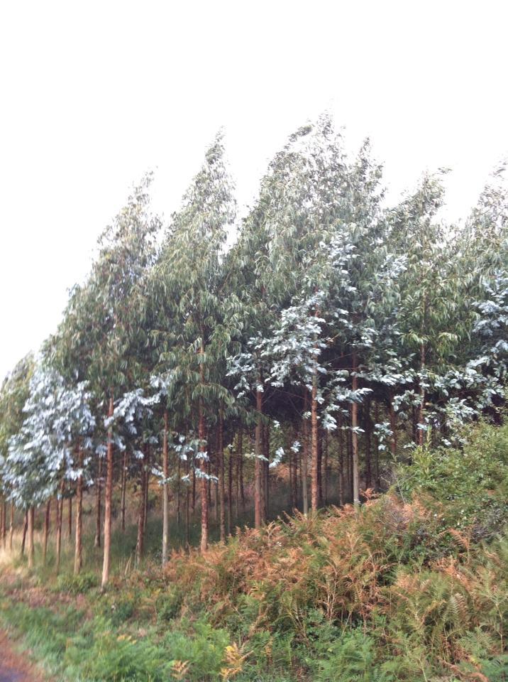 Tree orchard near Gonzar
