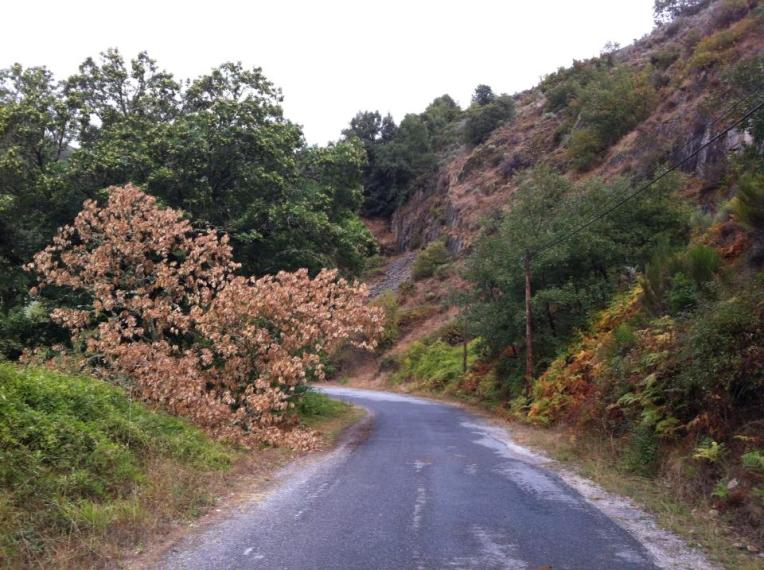 Route outside of Villafranca del Bierzo, approaching Pereje