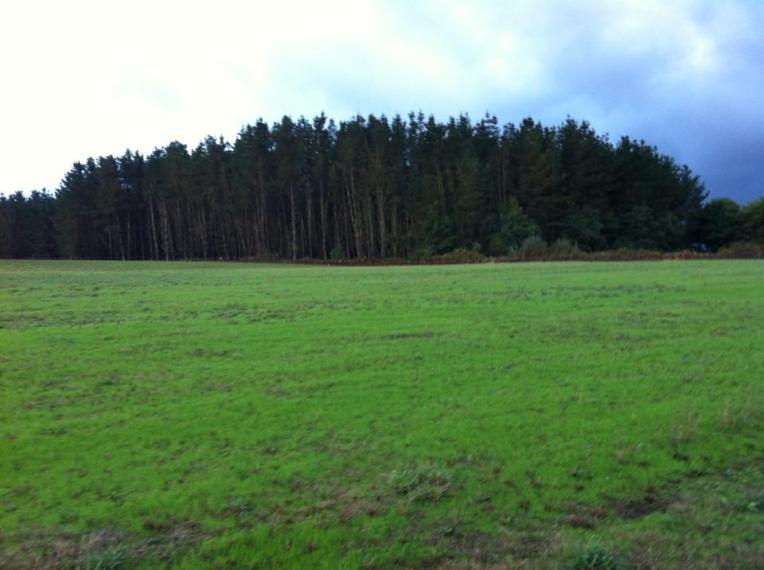 Vista near Palas de Rei