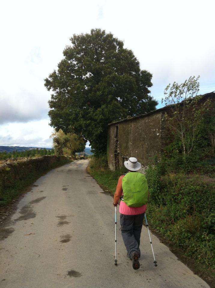 Trail near San Mamed del Camino