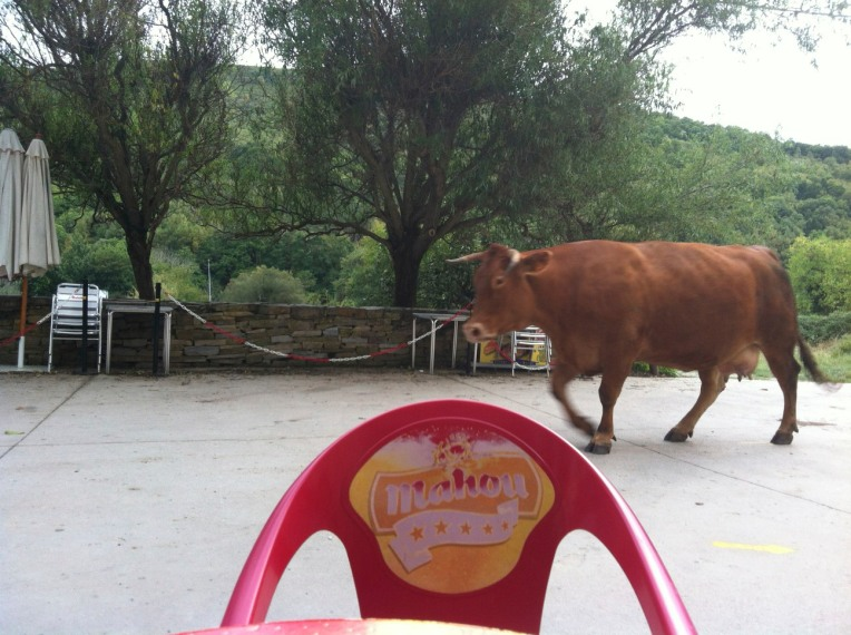 Yep, cow walking by the bar in Triacastela