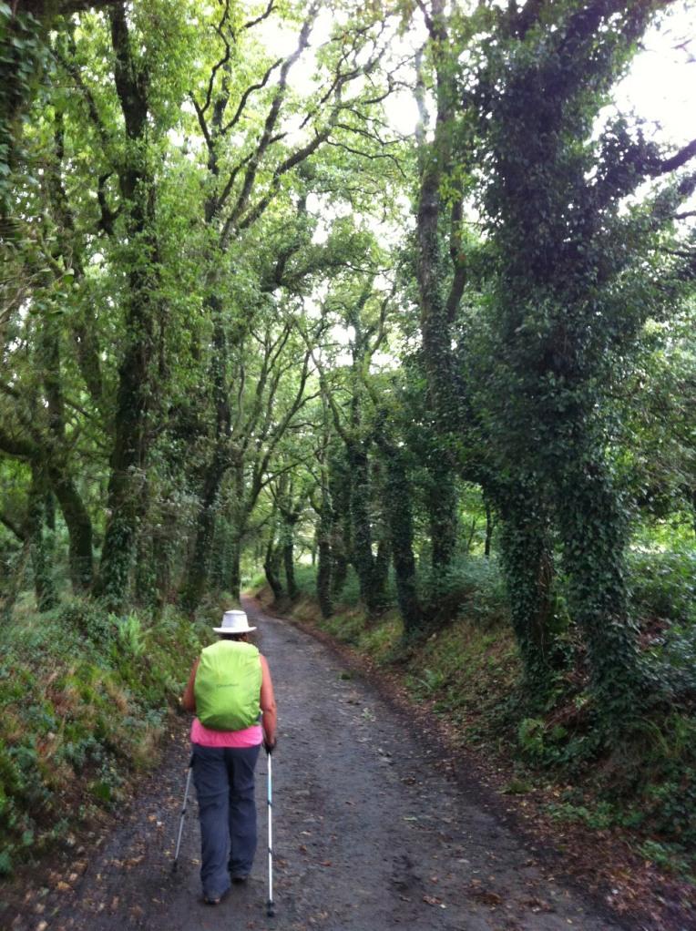 Tracy walking along the tree lined path near Hospital de la Condesa