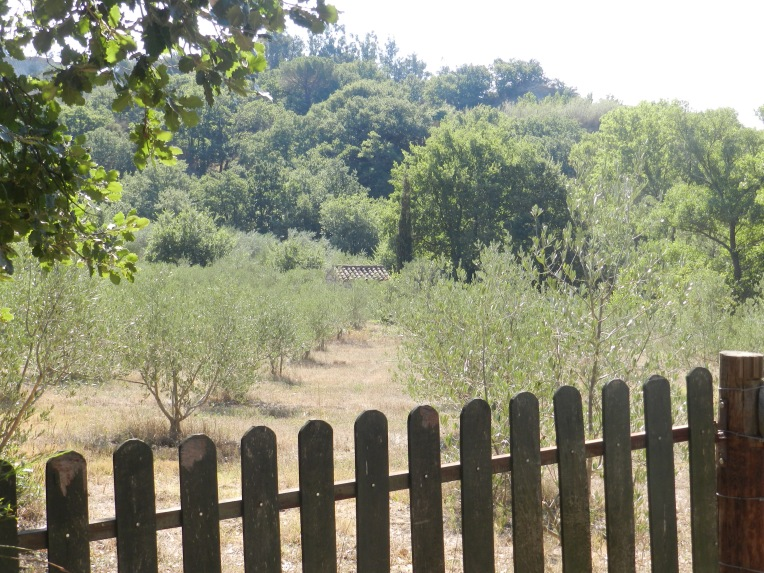Part of the interpretive trail, an olive grove shows the types of trees that could grow here before the area was irrigated.