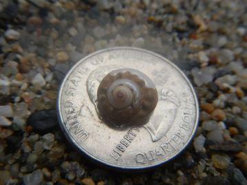 Baby sea snail