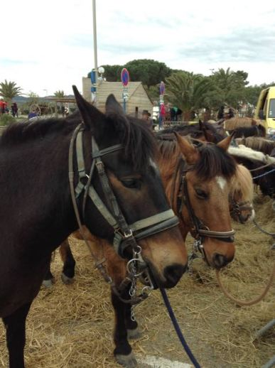 Ponies for the children's pony rides