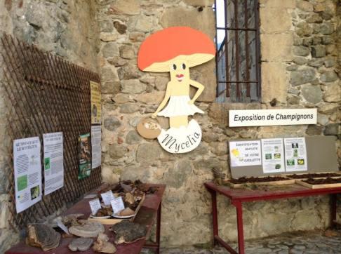 Mushroom Expo!