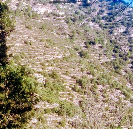 The entire hillside of Mount Belloc is terraced, formerly for crops or grapes we didn't know for sure.